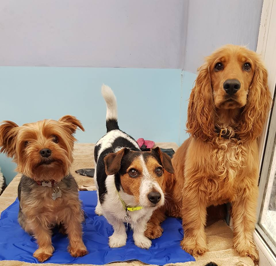 doggy daycare Atherton